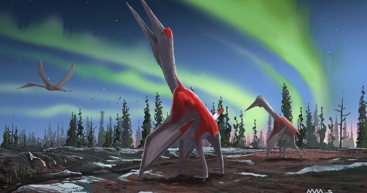 One of the largest flying animals in History Revealed