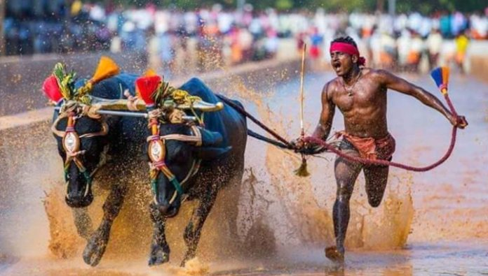 The Indian broke the record of Bolt-on competition with Buffalo