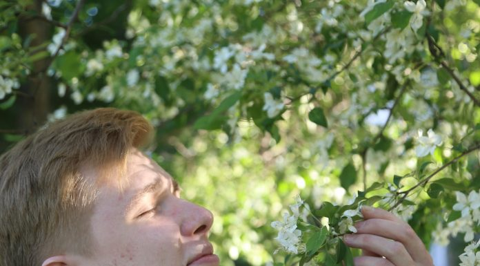 10 places in Novosibirsk for cool photo shoots in blooming Apple trees (how to pose — shows handsome)