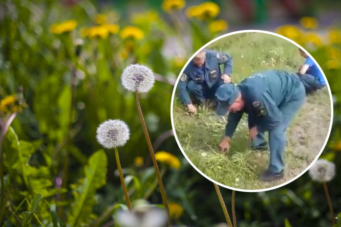 Near Novosibirsk firefighters were forced to cut the grass with nail scissors — they caught it on video