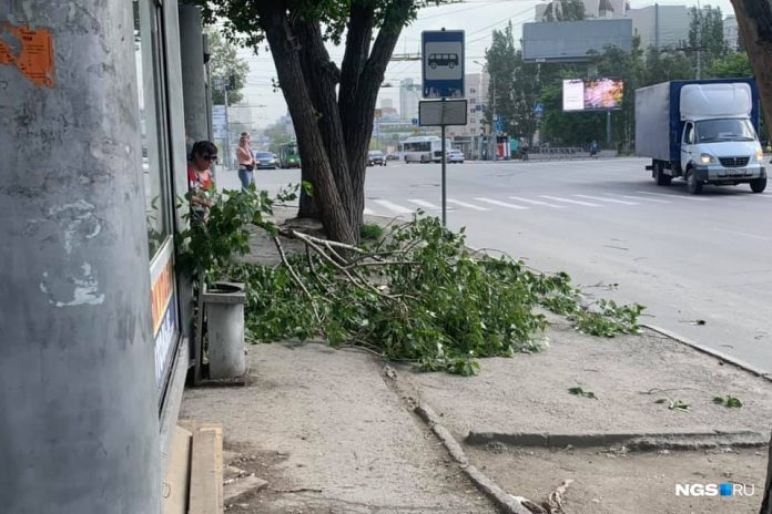 The Gale-force wind fells trees in Novosibirsk. Look what's happening right now on the streets
