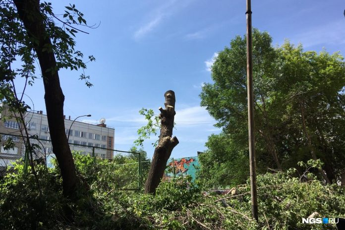In the centre of Novosibirsk suddenly began to demolish the trees in the leafy courtyard