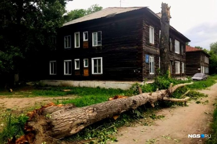 In the mayoralty of Novosibirsk has told, who is responsible for the branch of a poplar, killed a man during a hurricane