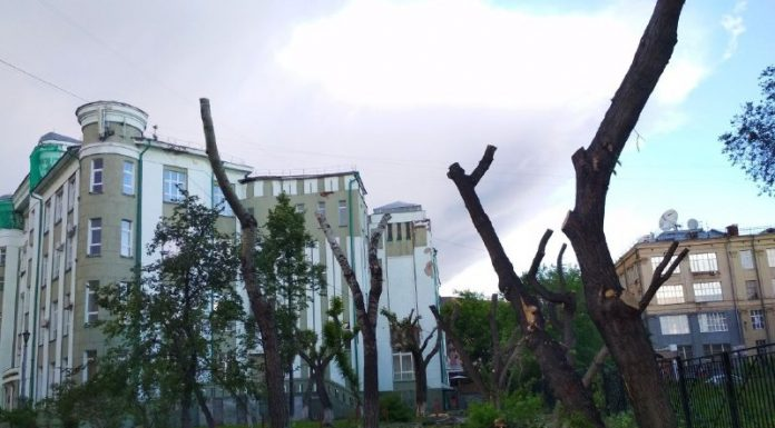 In the Park near the University of water transport felled trees. We found out why (you wonder)