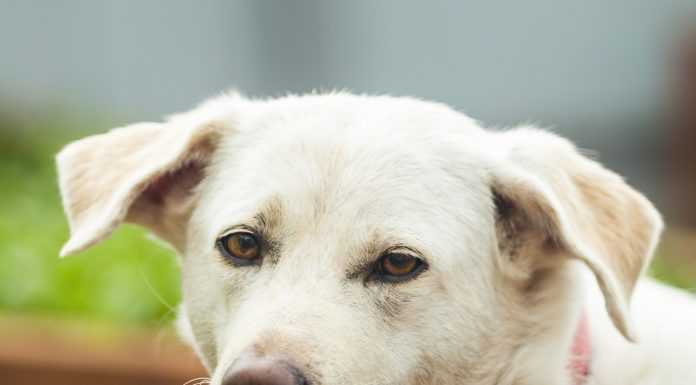 """""""First dogs, then the unwanted neighbor will kill you."""" Discuss who and what is poisoning animals in the quiet center"""