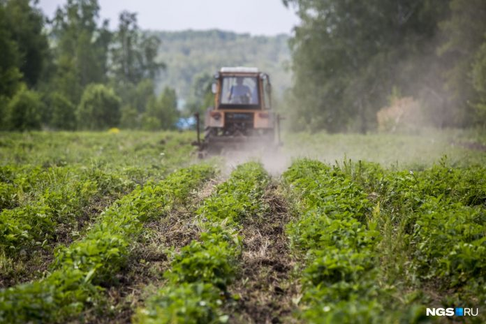 In the Novosibirsk region has introduced emergency mode due to drought