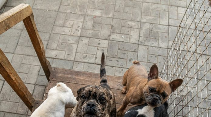 """""""She has over 100 dogs!"""": the city's residents suffocating from the stench and can't sleep due to the barking of the dog kennel"""