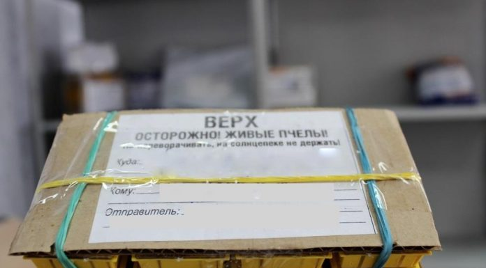The postal service of Novosibirsk has made a rating of the most unusual packages