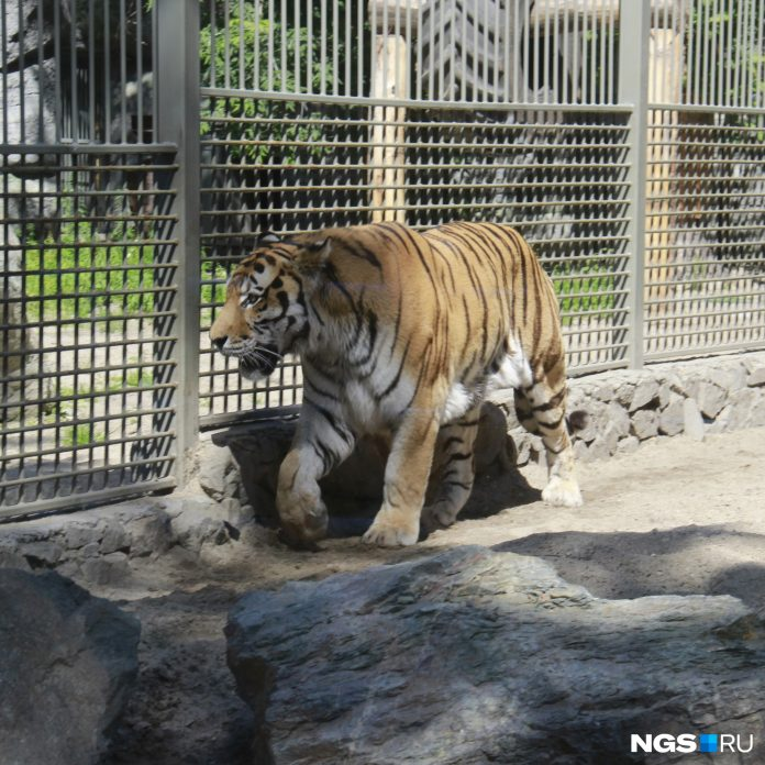 Uncomfortable to buy tickets online: the Director of the Novosibirsk zoo announced a low flow of visitors