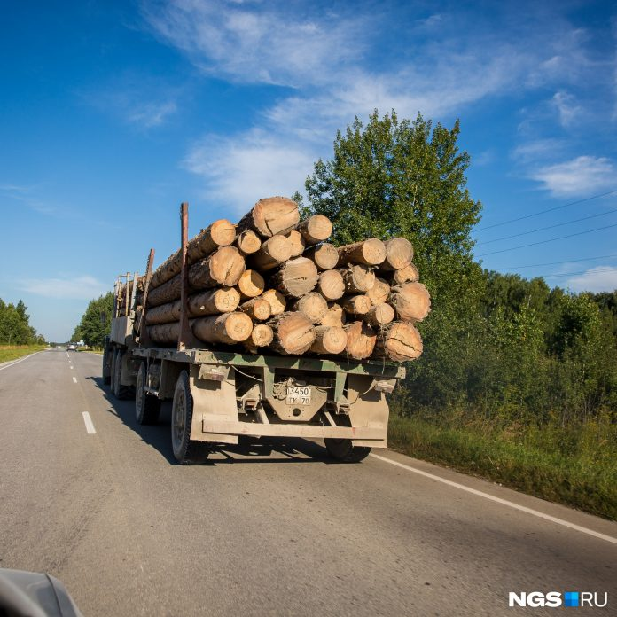 A resident of Kyrgyzstan will go on trial for bribery — he was trying to smuggle a forest of Novosibirsk region