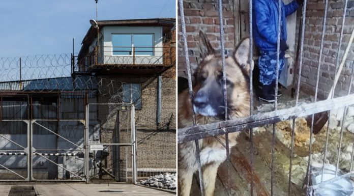 In Novosibirsk the canine that was bitten by a service dog, will pay the court more than 70 thousand rubles