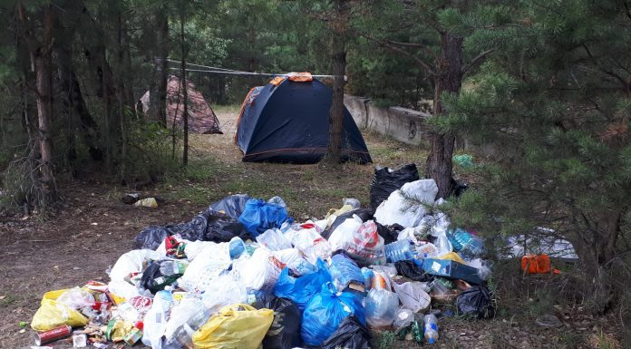 Pigs in the forest: as one of the most beautiful places of Novosibirsk turned into a huge miles dump