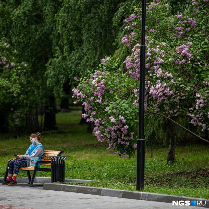The consequences of the hurricane and other news of Novosibirsk: the online chronicle of 27 may