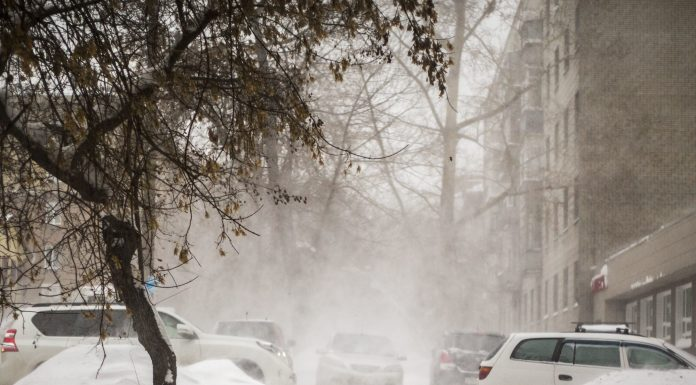 Why now the abnormally warm winter — explain forecasters from Novosibirsk