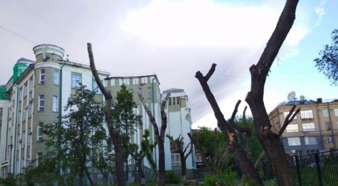 In the mayoralty have told about the fate of the Park near the University of water transport, where cut down trees