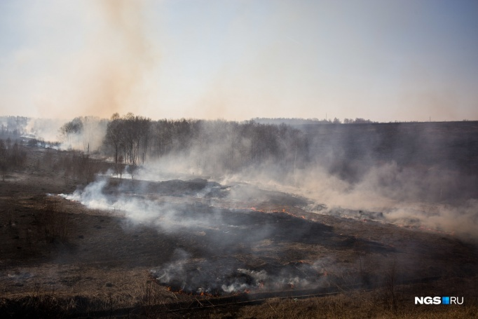 Novosibirsk region was the first in Russia on landscape fires. Burned 36