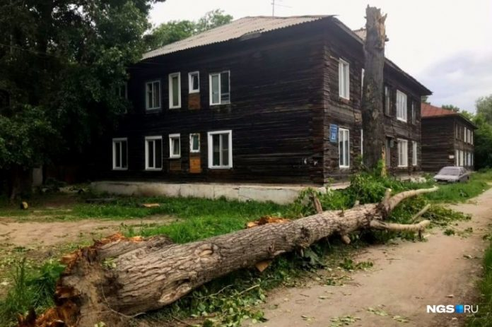 SC opened a criminal case after the death of Novosibirsk, which fell poplar branch during a hurricane