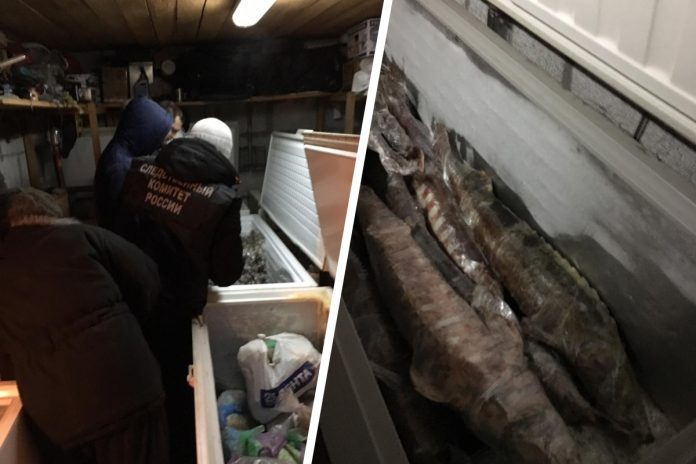 A couple of the Siberians found 60 frozen sturgeon — now to them threatens till 8 years