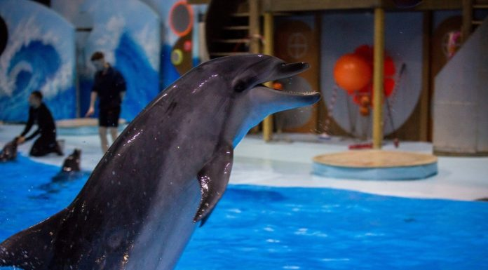 """""""If you'd been sitting for 25 years in the bathroom, we would become a psycho?"""" Siberian entered into a dispute with the Deputy mayor about dolphinariums"""