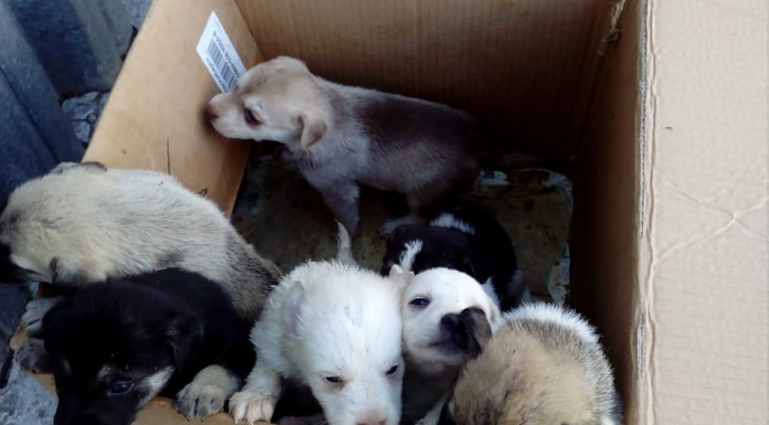 """""""It hurts us and it hurts"""": on domestic animals refused to take throw them puppies"""